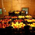 Kolm aastat tagasi Salmel 8000 õunapuud istutanud Saaremaa suurim õunakasvataja Riho Kadastik müüb tänavu esimest aastat oma õunu, ka Saaremaal. Tõsist saaki ootab õunakasvataja järgmiseks aastaks, tänavune kogus jääb 10 ja 15 tonni vahele.