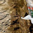 Kaks nädalat tagasi Salmelt leitud muinaslaeva puidust osad on spetsialisti kinnitusel tehtud okaspuust, mis tõenäoliselt oli mänd.