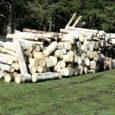 """Saaremaa suurim puidu kokkuostja OÜ Reta Puit direktor Andres Kirst ütles """"Aktuaalse kaamera"""" uudistele, et okaspuu paberipuu kokkuost on praegu sisuliselt kuni kevadeni peatatud ning seda ostetakse vaid siis, kui firma ise ka raiub."""