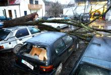 Murdunud puu lõhkus remonti oodanud autosid