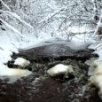 Suure osa aastast Muhumaal elav mandrimees võttis südameasjaks võitlemise Lõetsa jõele ebaseaduslike tammide rajamise ja jõel võrkudega röövpüügi vastu.