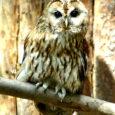 Kuuldes metsas öist huiget võib üsna kindel olla, et selle autoriks on 2009. aasta linnuks valitud kodukakk (Strix aluco). Sellise valiku tegi Eesti Ornitoloogiaühing. Saaremaal väga levinud linnule pühendatud aastal püütakse kodukakku ja tema eluviise laiemalt tutvustada.