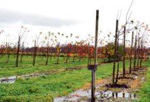 Õunakasvatajad tahavad toota veini ja krõpse