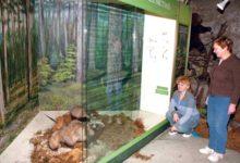 Muuseumi loodusosakonnas uuendati vitriinide taustu