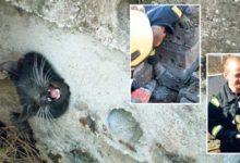 Päästjad puurisid betoonploki sisse kinni kiilunud kassi välja