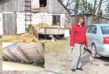 Uue-Oti talu Sõrves võõrustab ligi 70 pääsukesepaari