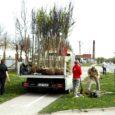 Eile istutati Kuressaares Pika tänava äärse kergliiklustee serva 52 iluõunapuud sordinimega Rudolf. Puud on pühendatud linna sünnipäevale.