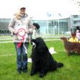 Laupäeval valiti Kuressaares aianduspäevade raames toimunud koertenäitusel match show Saaremaa ilusaimaks koeraks 5-aastane Newfoundlandi tõugu koer Donna. Donna oli nii ilus, et lisaks žüriile hindas tema kõige kaunimaks ka kohale tulnud publik. Ilusaks olemise eest võis koer koju viia 15 kilogrammi jagu koeratoitu.