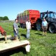 Eelmisel nädalal alustas mitu põllumeest talvise sööda varumisega. Lühike, ent mahlakas ja toitainerikas rohi läheb siloks.