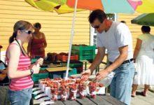 Üle turu levib maasikalõhn