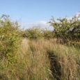 Statistikaameti andmetel on Saaremaa viljapuu- ja marjaaedade kogupind viimase viie aastaga kahanenud statistilises arvestuses üle kolme korra.