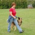 Saaremaa meistrivõistlustel koerte kuulekuskoolituses osales tänavu rekordarv koeri. Kuressaares koerteklubi Aktiiv treeningväljakul toimunud võistlustel pälvis meistritiitli segavereline koer Mortimer, kelle omanikuks on Monika Põld.