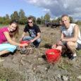 Laupäeval, kui Panga külas käis kiire kartulivõtt, peatus tee servas väike Volkswagen ja põllule tuli kolm noort inimest, kartulinoppijatele appi.