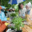 """Sel pühapäeval toimub Kuressaare tervisepargi alguses üritus nimega """"Kuressaare rohevahetus"""" – inimestevaheline vaba taimevahetus."""