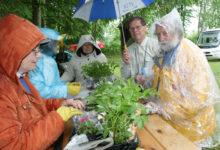 Kuressaare tervisepargis kohtuvad rohenäpud