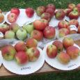 Kõljala 2. õunalaat läks korraldajate sõnul igati korda, rahvast käis laadalt läbi üle kolmesaja inimese.