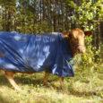 Saaremaa veterinaarkeskuse juhi Toivo Jürissoni sõnul tuleb loomade omanikul Auriga keskuse juures nädalaid vabalt ringi hulkunud kitsed ära viia.