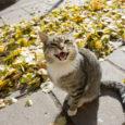 Reede õhtul leidis Kuressaares Vallimaa tänavas elav naine oma maja juurest vigastatud emase kassi, keda oli õhupüssist tulistatud lagipähe.