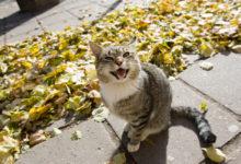 Kaabakas tulistas tiinele kassile püssikuuli pähe