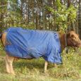 Kadunud mustale sokule ja neljale valgele utele lisandus eile sinist vihmatekki kandev pruun lehm, kes Muratsis asuvast Olena Voolu loomapargist plehku pani.