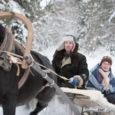 Lumi, lumi ja veel kord lumi. Paiküla imetoredas metsas samamoodi nagu mujal Saaremaal ja Eestis tervikuna. Puudevahelisel rajal ei paista lohud ja künkad paksu koheva valge vaiba alt välja. Autoga, isegi maasturiga oleks sellisel künklikul teerajal keeruline sõita. Riidu talu Orkaan tuhises aga ree ees paari meetri laiusel teelõigul nii, et lumejutt taga. Kord kaldus regi ühele, siis jälle teisele poole kreeni.