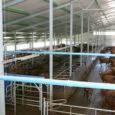 Möödunud suvel Valjalas valminud Saaremaa esimene robotlaut annab lehmadele tavalaudaga võrreldes palju suurema vabaduse, kuid toob kaasa ka olelusvõitlust ja tekitab piimaandjate vahel hierarhia.