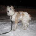 Nädalavahetusel Tallinna tänav 14 maja hoovis posti külge seotud väike koerake oli leidmise hetkel läbikülmunud ja väga kartlik.
