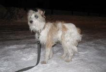 Juhuleidja jättis koera kinniseotult tänavale külmetama