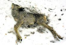 Karm talv pole loomadele halastanud