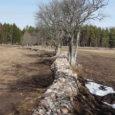 Eesti suuremaid põllumajandustootjaid ühendav Eesti põllumeeste keskliit ei poolda kiviaia taastamise toetuse jätkumist. Keskliit soovitab uues maaelu arengukavas kiviaedade taastamiseks ette nähtud 3 miljonit eurot suunata hoopis keskkonnasõbraliku majandamise meetme […]