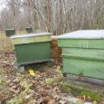 Eesti mesindusorganisatsioonid tulid seoses uue maaelu arengukava koostamisega välja ettepanekuga leida võimalus maksta mesinikele alates 2014. aastast mesilaspere toetust 21 eurot pere kohta. Eesti mesinike liidu juhatuse esimees Aleksander Kilk […]
