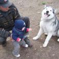 Ühest Mustjala koduõuest kadus neljapäeva hilisõhtul noor Alaska malamuut Lumekuningas. Pererahvas kahtlustab, et koer on varastatud ning on pöördunud abipalvetega politsei ja meedia poole.