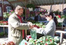 Lilled, tomatid ja kurgid Aaseli aiast Valjalast
