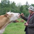 Tõnis Saar, bussifirma GOBus bussijuht, kasvatab oma kodukülas Mässal kolmandat aastat lihaveiseid. Loomadega mässamine pakub pika staažiga roolikeerajale hingekosutust. Kolm aastat tagasi alustas sõrulane oma isatalus veisekasvatust seitsme loomaga. Nüüdseks on karjas 41 veist.