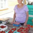 """Eile kella 16 paiku Kuressaare turul veel ainsana maasikaid müüv Helve Turja (fotol) Pihtla valla Kaali külast ütles, et eile osteti maasikaid väga palju. """"Minul oli järjekord kogu aeg, isegi süüa pole aega olnud,"""" rääkis naine, kes maasikakasvatusega tegeleb 11. aastat järjest."""