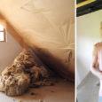 Salmele oma elamist ehitama hakanud noorperele tuli mõte valida oma kodule looduslik soojustus ning noored otsustasid selleks kasutada lambavilla.