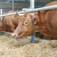Kuumal suvel on tavaline, et lehmade piimatoodang kahaneb ning enim kannatavad kuumuse käes kõrge tootlikkusega karjad.