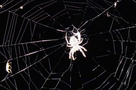 Augustikuu ämblike salaelu ehk Charlotte koob võrku