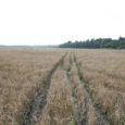 1. jaanuarist kehtima hakkav tulumaksusoodustuse kadumine eraisikutele makstavate põllumajandustoetuste pealt suruti läbi, vaatamata põllumajandusministeeriumi vastuseisule. Eelmisel nädalal võeti poollooduslike koosluste (PLK) hooldajate suhtlusvõrgustikus üles eraisikutele makstavate põllumajandustoetuste maksustamise teema, millega […]