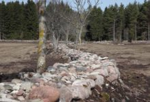 Saarlased küsivad toetust 55 km kiviaia taastamiseks