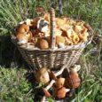 Kolmapäeva õhtul avastas seenemetsast naasnud naine, et tema puu alla jäetud seljakott on kadunud. Kannatanu Katre oli koos sõbrannaga Kaali lähedal metsas, Liiva-Putlas ajavahemikul kell 14-17. Korjasid nad seal seeni […]