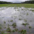 Ruhnu blogi teatel on lennuühendus mandri ja Saaremaaga taas katkenud, sest viimastel päevadel sadanud vihm on lennurajal uputuse tekitanud.