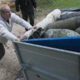 Saaremaa suurimas järves kala püüdes võib täiesti vabalt looja karja sattuda. Selle põhjuseks on järve põhjas vedelevad Nõukogude lennukipommid, mille taha võib näiteks kalavõrk takerduda. Eile tõid demineerijad järvest taas välja kolm lõhkekeha.
