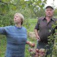 Pöide valla Mui küla suurim, 1,2 hektarine õunapuuaed Jaani-Enno talu maadel on juba uhkes sügisrüüs. Punapõsksed õunad lausa püüavad möödakäijate pilke. Talunikud Enno ja Malle Välisson on õuna-aastaga rahul – rekordsaaki pole aed küll andnud, pigem on saagikus alla keskmise, aga nuriseda pole ka põhjust.