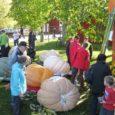 Laupäeval selgus Soomes rahvusvahelisel kõrvitsafestivalil, et Pihtla vallas soomlase Juha Ollila suvekodus kasvanud hiiglaslik kõrvits kaalub 274, 8 kilo.