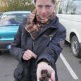 Kolmepäevasel uurimisretkel Saaremaal trühvelseeni leida lootnud rootsi teadlasel Christina Wedenil õnnestus eile hommikul trühvlite otsimisele spetsialiseerunud koerte abiga Kuressaare külje all Loode tammikus välja kaevata peotäis hinnalisi delikatess-seeni.