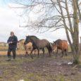 Ülo Metsmaker (69) ise ennast ainult hobusekasvatajaks ei pea ja usub, et ühtviisi võrdselt on ta oma zootehniku-tööaastate jooksul kaasa aidanud kõikide majandis kasvatatavate loomatõugude arendamisele.