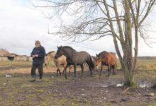 Hobustele ustav Ülo