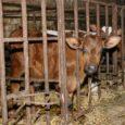 18. novembril avalikustas Euroopa Komisjon teatise ühise põllumajanduspoliitika eesmärkide kohta EL-i uuel eelarveperioodil 2014–2020.