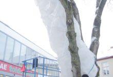 Kuressaaret ilmestavad valgusskulptuurid